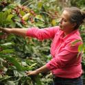 Café Honduras Marcala Miriam Elisabeth Perez