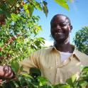 Carton 5kg - Café Ethiopie moka sauvage KAFFA Tatmara